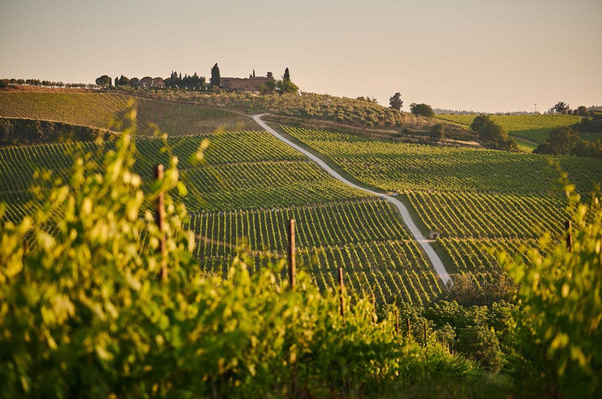 spain-wine-vacation